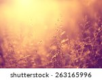 vintage blurred meadow at... | Shutterstock . vector #263165996