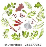 vector different herbs and... | Shutterstock .eps vector #263277362