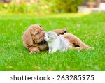 Stock photo bordeaux puppy dog playing with kitten on green grass 263285975