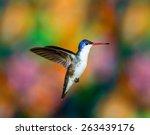 violet crown hummingbird. part... | Shutterstock . vector #263439176