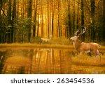 Deer Bucks In Summer Sunset...