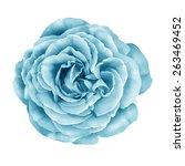 Blue Turquoise Camellia Rose...