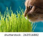 Cat Eats Grass.