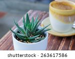 Small photo of small aloe cactus in white pot on wood table
