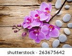 pink orchid with buds. greeting ... | Shutterstock . vector #263675642