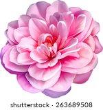 Pink Rose Camellia Flower...