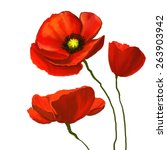 Poppies Vector Illustration ...