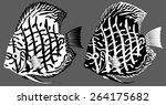 Vector Aquarium Fish Discus