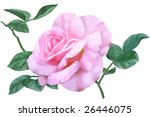 the beautiful flowers for... | Shutterstock . vector #26446075
