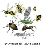 Watercolor Set Of Insects. Wasp ...