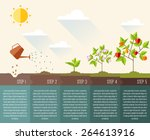 steps of plant growth. timeline ... | Shutterstock .eps vector #264613916