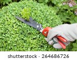 cutting and pruning the boxwood ... | Shutterstock . vector #264686726