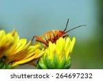 Iinsect  Moth  Bug  Beetle...