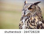 Stock photo eagle owl an eagle owl 264728228