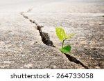 Plant Grow On Crack Street  ...