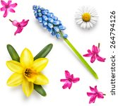 Spring Flower Heads Of Daffodi...