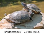 two red ear tortoice close up | Shutterstock . vector #264817016