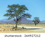 Lonely Tree    Namibia  South...
