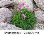 alpine mountain home garden... | Shutterstock . vector #265009745