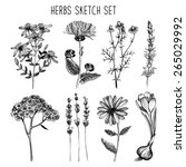 vector set of ink hand drawn... | Shutterstock .eps vector #265029992