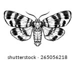 butterfly sketch. detailed... | Shutterstock .eps vector #265056218