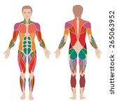 vector muscular human body ... | Shutterstock .eps vector #265063952