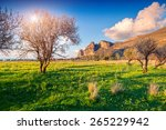 blossoming almond garden on the ... | Shutterstock . vector #265229942