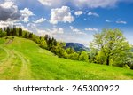 path through the field with green grass in mountains near coniferous forest - stock photo