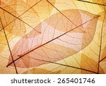 leaves background | Shutterstock . vector #265401746