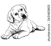 Stock vector image of labrador retriever puppy hand drawn vector 265483805