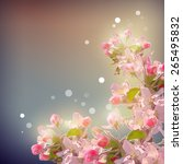 shining cherry blossom... | Shutterstock . vector #265495832