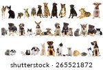 Stock photo group of pets on white background 265521872
