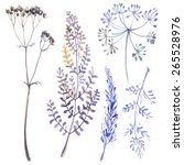 a set of herbs and flowers hand ... | Shutterstock . vector #265528976