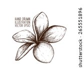 ink hand drawn frangipani ... | Shutterstock .eps vector #265551896