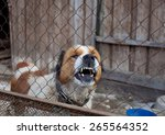 Aggressive Furious Dog In Cage...