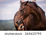 Western Ride Style  Horse With...