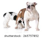 Animal Behavior   One Dog...