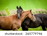 Stock photo two horses embracing in friendship 265779746