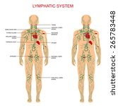 human anatomy  lymphatic system ... | Shutterstock .eps vector #265783448
