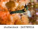 nembrotha sp nudibranch... | Shutterstock . vector #265789016