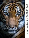 tiger | Shutterstock . vector #265811762
