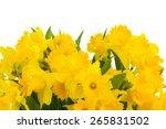 Border Of Spring Yellow...