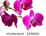 orchid | Shutterstock . vector #2658681