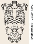 detailed anatomical... | Shutterstock .eps vector #266044292