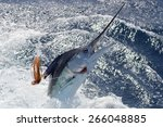 New Zealand Striped Marlin