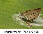 dun skipper | Shutterstock . vector #266177756