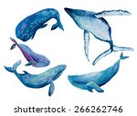 watercolor illustration whales...