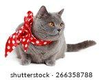 handsome short hair gray... | Shutterstock . vector #266358788