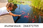 Little girl plays with ornamental fish that swim in a pond
