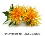 Yellow Safflower Over White...
